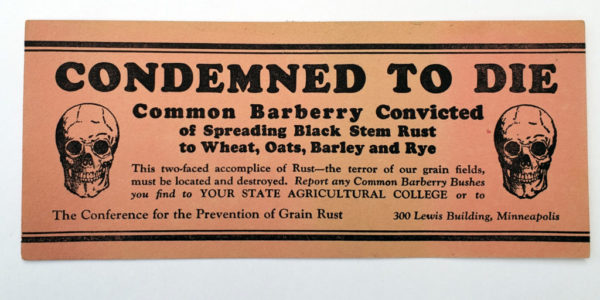 1920s ink blotter for Barberry Eradication Campaign